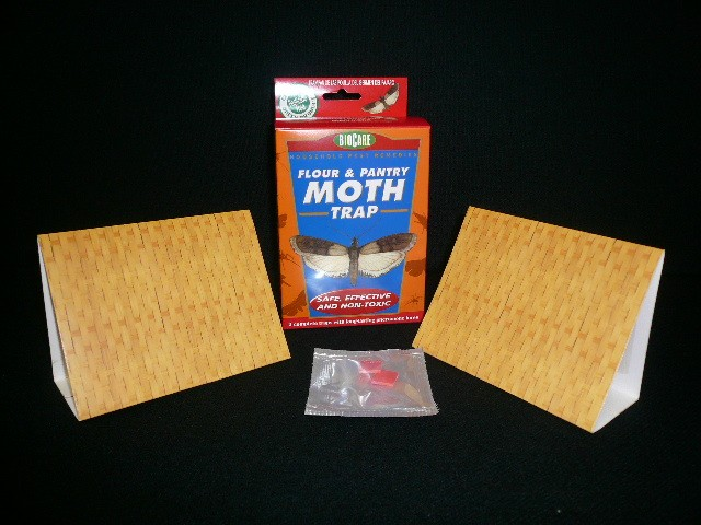 MEAL MOTH 2 PK - BOX