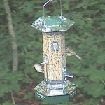 SQUIRREL SCATTER BIRD FEEDER